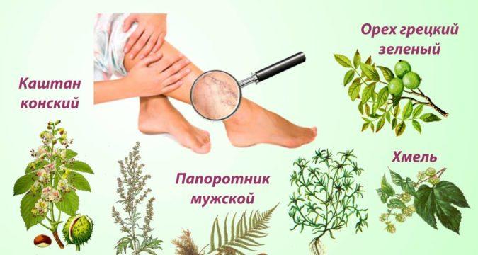 Травы от варикоза вен